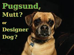 Design Mutt Mutt Or Designer Dog Helpful Information About Pugsunds
