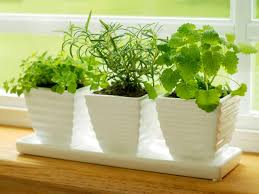 herbs on windowsill