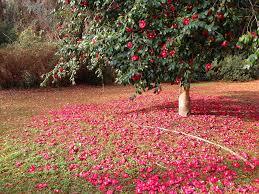 Desktop Wallpapers Petals flower ...