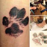 Galerie Tetování Podle Psích Tlapek Koulecz Lifestyle V Kostce
