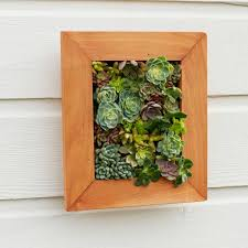 succulent wall art popular in small home decoration ideas with succulent wall art