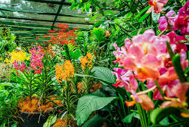 over 60 000 plants bloom inside the world s largest orchid garden travel smithsonian