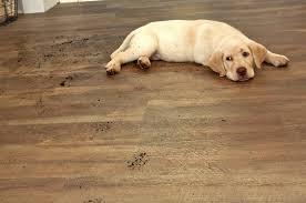 best area rug for dog designs