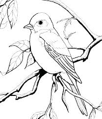 Printable Bird Nest Coloring Pages Free Birds Page Robin Eagle