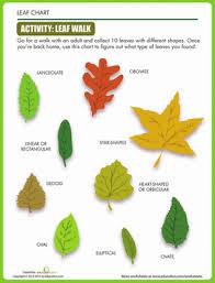 Leaf Shapes Worksheet Education Com
