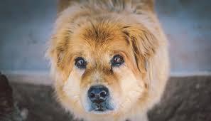 Traumdeutung Hund Was Bedeuten Hunde Im Traum Hundeträume Deuten