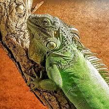 petsmart reptiles for sale. Interesting Petsmart Habitat Dcor Intended Petsmart Reptiles For Sale