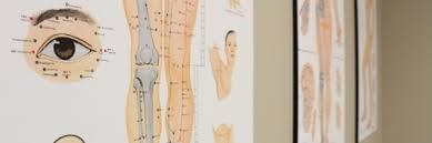 Chiropractic Wall Charts Caledon East Family Chiropractic