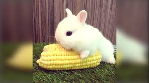 <b>Cute Rabbit</b> - Funny And <b>Cute Bunny</b> Videos Compilation Of Rabbits ...