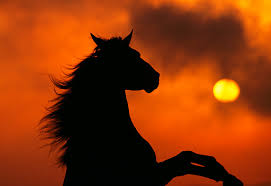 black horse rearing in sunset. Contemporary Horse Black Horse Rearing In Sunset  Photo7 And Horse Rearing In Sunset I