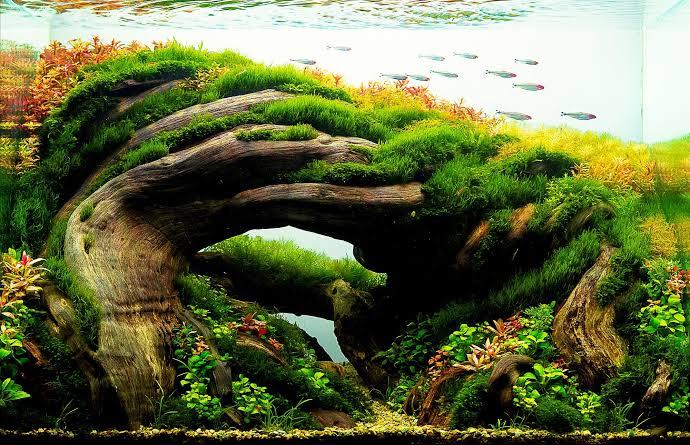 Tema aquascape natural