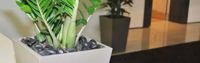 single pot with pebbles brisbane cbd indoor plant hire brisbane office plants