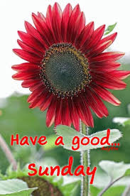 76533053 Good Morning Sunday Greetings Morning Messages Good
