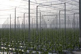 Factors To Consider For Successful Production In Controlled Environments -  Growing Produce