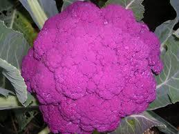 cauliflower plant.  Cauliflower Purple Headed Cauliflower And Cauliflower Plant I