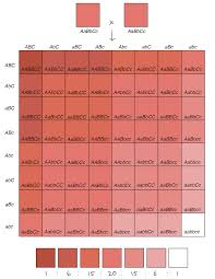 Hair Color Dominance Chart Polygenic Inheritance And Environmental Effects Article