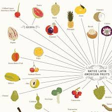 The Various Varieties Of Fruits Poster 99x68cm Pop Chart Lab
