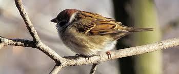 identify the uk s 10 most common wild birds