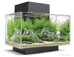 Fish Tank Accessories And Decorations interior Fish Tank Decor Ideas Small Decoration Decorations 49