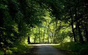 nature backgrounds. Nature Background Backgrounds O