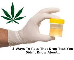 Solutions to pass a piss test