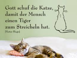 Zitate Sprüche Katzen Zitate Für Das Leben