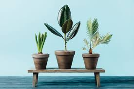 Indoor home office plants royalty Illustration Close Up View Of Green Plants In Flowerpots On Wooden Decorative Bench Isolated On Blue Tenkaratv The Best House Plant You Can Buy According To Your Needs