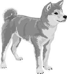 柴犬の白黒モノクロでかっこいい犬の無料イラスト67999 素材good