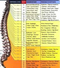 Vertebrae Number Chart Subluxation Monterey Bay Holistic Alliance