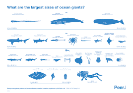 ocean by size the largest creatures in the ocean chart twistedsifter