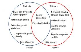 Venn Diagram Of Asexual And Sexual Reproduction Interesting Asexual Vs Sexual Reproduction Venn Diagram