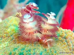 Top 15 Strange Deep Sea Creatures  Worldu0027s Exotic BeachesChristmas Tree Worm Facts