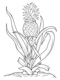Small Picture Pineapple Tree coloring page Free Printable Coloring Pages