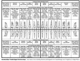 Tooth Meridian Chart Eric Davis Dental Interactive Meridian Tooth Body Chart