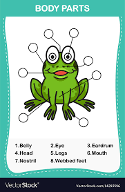 Parts Of A Frog Frog Vocabulary Part Of Body Royalty Free Vector Image
