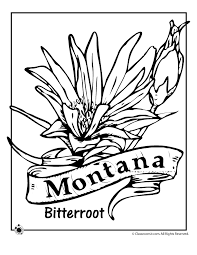 Small Picture Montana State Flower Coloring Page Woo Jr Kids Activities