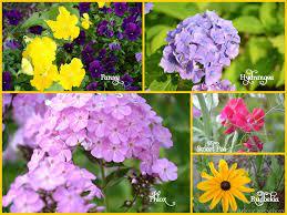 K Name Flower Wallpaper