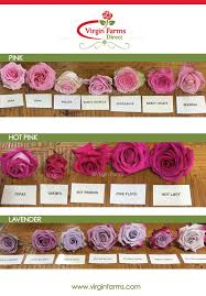 Cut Flower Chart Rose Variety Comparison Chart Pink Hot Pink Lavender
