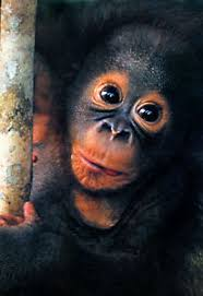 Details About Baby Orangutan Poster Cute Baby Monkey
