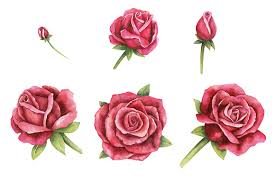 Small Picture Watercolor hand drawn roses by Kamila Nigmatullina TheHungryJPEGcom