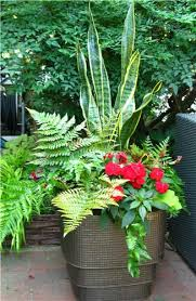 Shade Sansevieria With Mixed Ferns And New Guinea Impatiens Container Garden Shade Plants