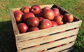 Compare Prices On Miracle Fruit Trees Online ShoppingBuy Low Full Size Fruit Trees For Sale
