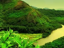 nature wallpapers high resolution green. Exellent Nature Nature Wallpapers High Resolution Green And L