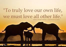 Elephant Quotes Enchanting Quotes