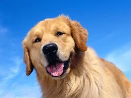 Παροιμία με σκύλο και...  δυσκολίες!