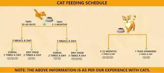 What Do Persian Cats Typically Eat Quora