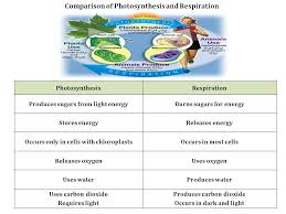 Chapter 8 Photosynthesis And Respiration Concept Mapping Venn Diagram Answers 6 L 5b 2 Photosynthesis Respiration Transpiration South