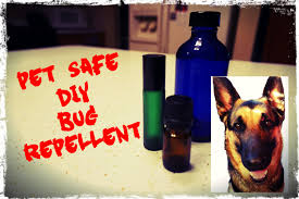 diy the best natural dog friendly bug repellent for ticks fleas other pesky insects you