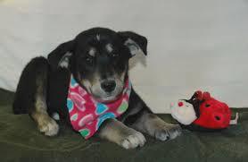 my name is husky pups