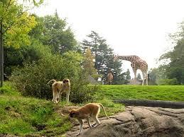 Woodland Park Zoo Wedding Venues Vendors Wedding Mapper